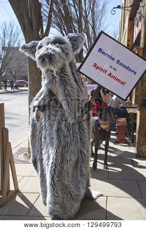 Asheville North Carolina, USA - February 28, 2016: A Bernie Sanders supporter dressed as a large animal walks a dog and carries a sign saying