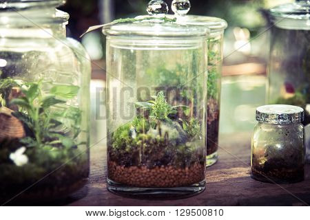 Terrarium In Glass Jar