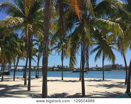 Dreamy palm trees at Bayside Park in Miami, Florida.