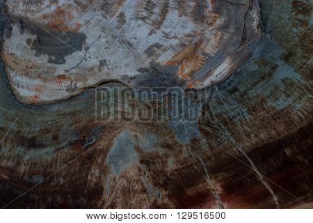 background and texture of old fossil wood