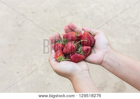 Hand Holding Strawberry On Ground Background