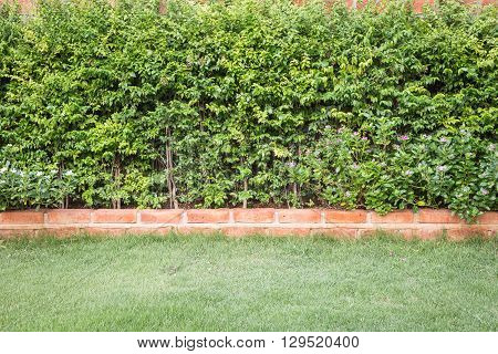 Pattern Green Plant Wall Texture And Background