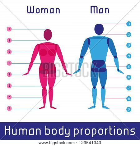Human body measurements and proportions gender scheme