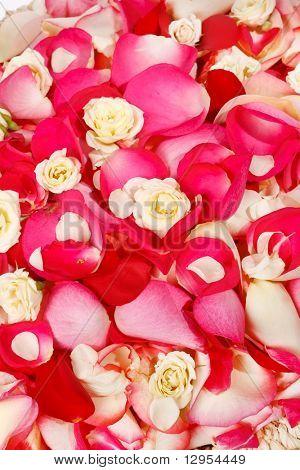 petals in the basket