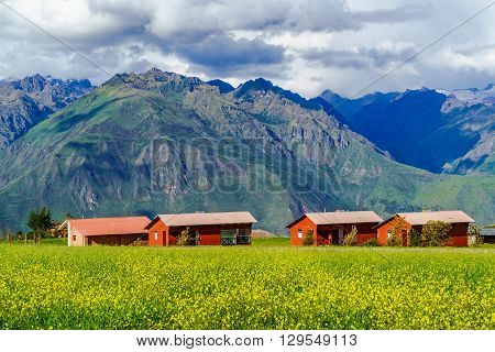 View of mountain and the field of yellow flower in Sacred Valley of the Incas Peru.