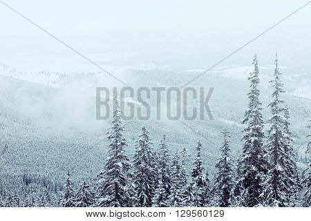 Beautiful winter mountains landscape with snow covered trees and fog above