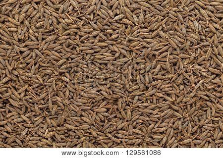 Organic Cumin (Cuminum cyminum) seeds. Macro close up background texture. Top view.