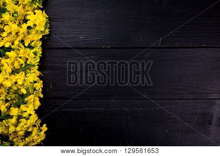 Rapeseed blossoms on black wooden background. The rapeseed is placed on the left side.