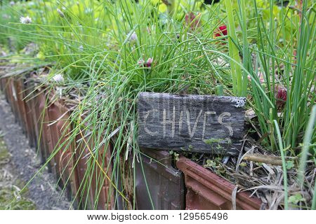Rustic Herb markers label Chives with organic chives
