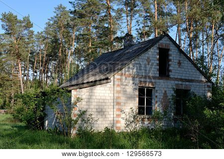 Old abandoned building in the pine forest