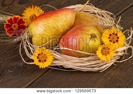 Pears fruit autumn decorated. Thanksgiving Day decoration.