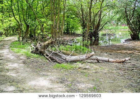 Part of the tree of wood lying in the grass and ruin.