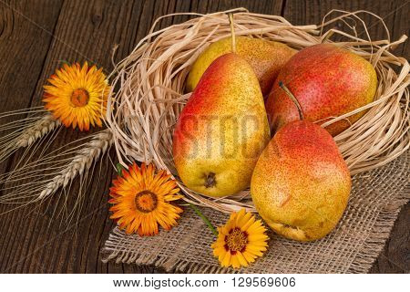 Pear fruits autumn compostion. Thanksgiving Day decoration.
