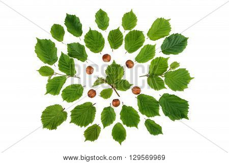 Creative arrangement of filbert nuts with leaves on white. Flat lay top view.