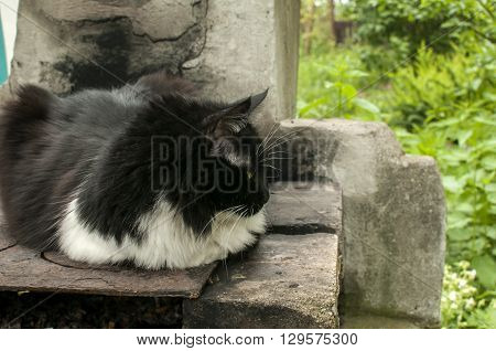 Cat resting on inoperative outdoor fireplace in village yard