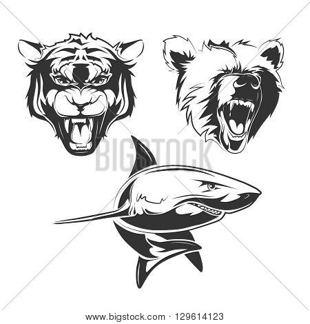 Vector elements for sport team labels with  grizzly, shark and tiger. Animal predator, tiger tattoo animal, wild bear animal tattoo, ocean shark animal tattoo illustration
