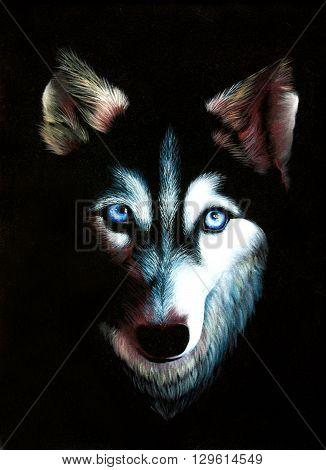 husky original oil painting on black velvet, dog with blue eyes impressionism painting on black velvet, drawing on black velvet art technique