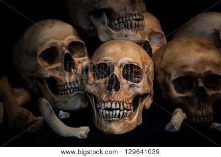 Closeup Pile of skulls and animal bones on black fabric background Genocides concept still life style.