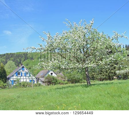 Springtime with Apple Tree Blossom in Bergisches Land near Solingen,North Rhine Westphalia,Germany