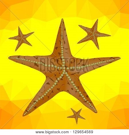 Plenty of Cushion Starfish on a Sandy Ocean Floor. Caribbean Starfish on a Yellow Polygonal Background
