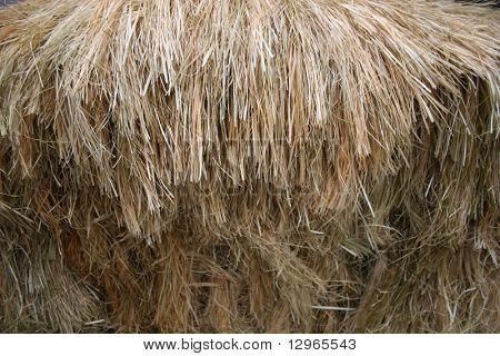 thatch