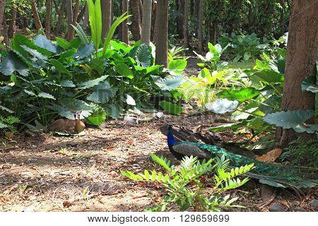 wild animals walk on a rainforest glade