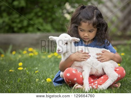 Young, Asian-American girl sitting on the grass holding a baby lamb