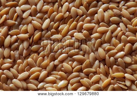golden flax seeds flax seeds yellow flax seeds of flax flax grains yellow linseed golden flaxseed