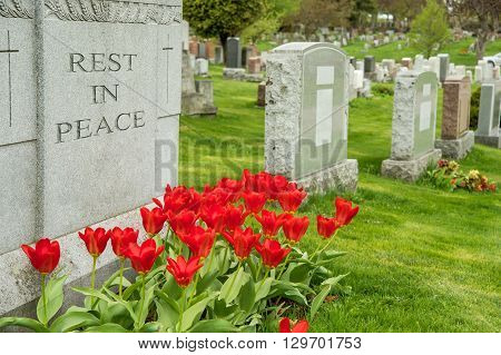 Headstones In A Cemetary With Red Tulips And