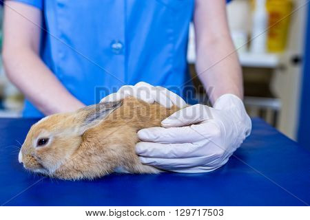 A woman vet petting a rabbit at medical office