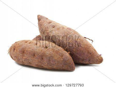 tapioca plants cassava closeup isolated on white background