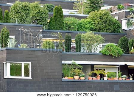 Multilevel black houses with terraces and growing various trees. Front view.