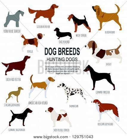 Dog breeds. Hunting dog set icon. Flat style. Vector illustration