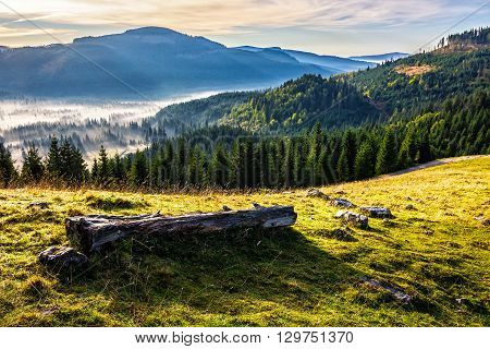 log in hillside near coniferous forest in foggy mountains of Romania