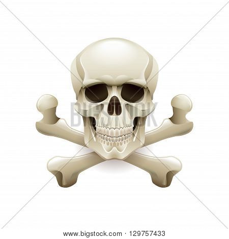 Skull crossbones isolated on white photo-realistic vector illustration