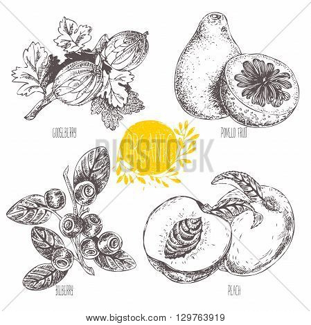 Series - vector fruit, vegetables and spices. Hand-drawn illustration. Sketch. Healthy food. Linear graphic. Set of blueberry, bilberry, whortleberry, blaeberry, gooseberry, peach, pomelo fruit