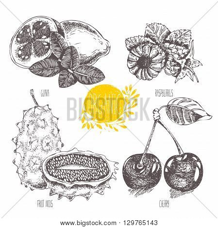 Series - vector fruit, vegetables and spices. Hand-drawn illustration in vintage style. Sketch. Healthy food. Linear graphic. Set of raspberry, cherry, guava, fruit nods