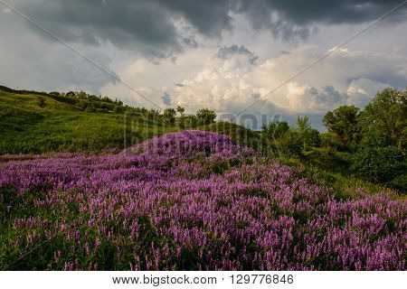 blooming flowers on the hillside and rain clouds