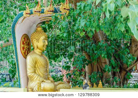 Buddha image sitting under Bodhi tree in temple thailand