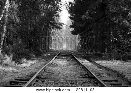 Old railroad going trough a forest in black and white
