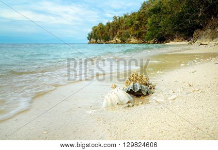 Seashells And Coral On Sand At Beach
