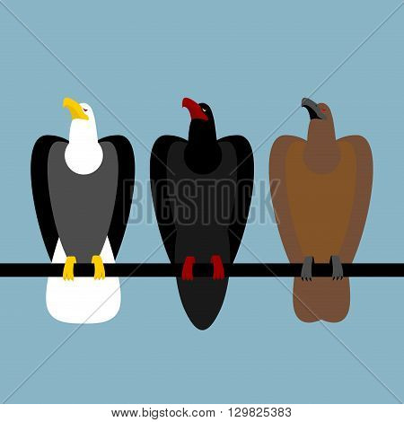Set Eagles Birds Of Prey. Quick Bald Eagle With White Head. Big Hawk With Large Beak. Ferocious Falc
