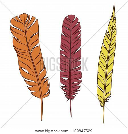 Plumage. Set of colorful feathers isolated on a white background. Vector illustration.