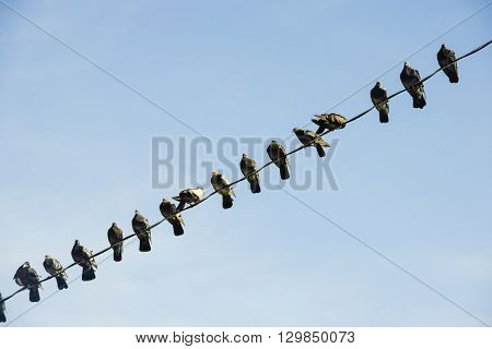 Birds on a wire graphic line organized against blue sky