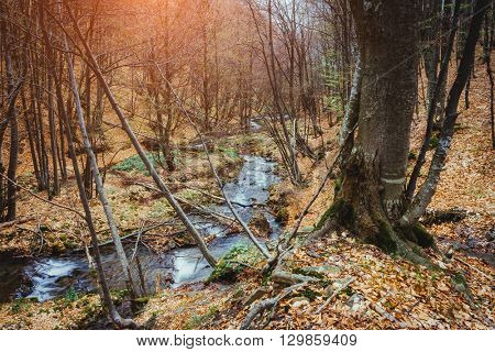 Fantastic carpet of yellow leaves in the forest glowing sunlight. Dramatic scene and picturesque picture. Location place Carpathian, Ukraine, Europe. Beauty world. Soft filter. Warm toning effect.