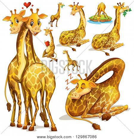 Giraffes in different positions illustration