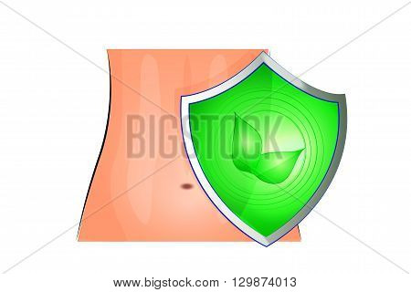 illustration of a female abdomen and of the shield that protects poster