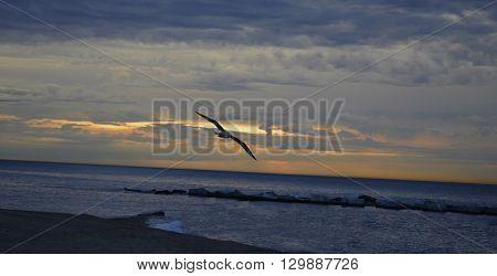 Pajaro en la playa durante el amanecer nublado