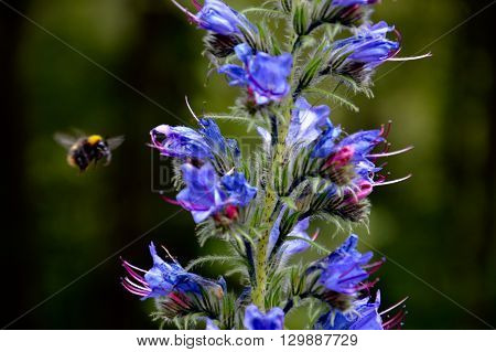 Flor en verano con un abejorro acercandose a ella