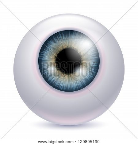 Human eyeball iris pupil isolated on white background - gray color. Gray eye realistic vector illustration.